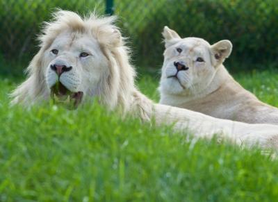 Image courtesy of MrWildLife at FreeDigitalPhotos.net